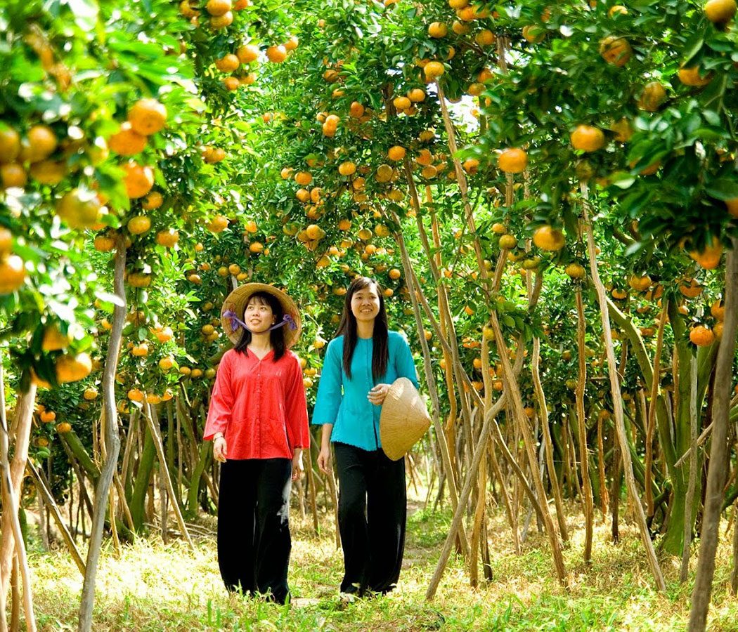Orchard in the Mekong Delta